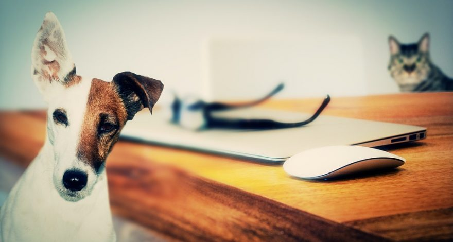 cat, dog and laptop - wills for animals